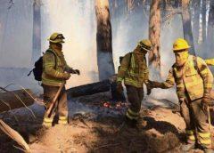Incendios forestales se disparan en un año que se prevé crítico por la sequía y altas temperaturas